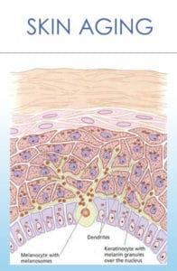 Skin Aging Jeunesse Ageless Luminesce